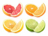 colorful citruces