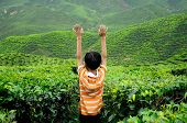 foto of cameron highland  - CAMERON HIGHLAND, MALAYSIA - DECEMBER 14, 2014: A child waving hand in the tea plantation is located in Cameron Highland, Malaysia. Cameron Highland is the most famous tea plantation in Malaysia. It is located in Pahang State in Malaysia.