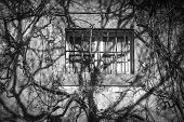 image of creeper  - old window on a wall filled with creepers - JPG