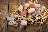image of manger  - Speckled quail eggs and chicken eggs in the manger on a rustic background - JPG