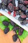picture of mulberry  - Group of mulberries isolated on wood background - JPG