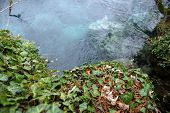 image of creeping  - Creeping ivy on the ground outdoors with small pond - JPG