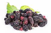 stock photo of mulberry  - Mulberries with leaf isolated on white background - JPG