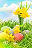pic of leak  - Easter eggs and daffodils flowers in green grass over cloudy blue sky - JPG