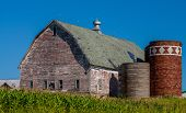 picture of silos  - a weathered barn and silos rise above a cornfield in rural minnesota - JPG