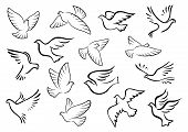 foto of peace-sign  - Pigeon and dove birds silhouettes in sketch style for peace or love concept design - JPG