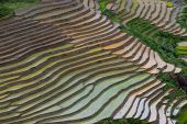 picture of northeast  - Mu Cang Chai is a rural district of Y - JPG
