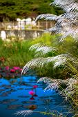 stock photo of pampas grass  - RELAXING POND OF LILIES AND TALL GRASS TOBAGO NATURE - JPG