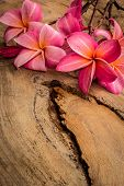 image of plumeria flower  - Flower plumeria flooring textures red flowers beautiful plants - JPG