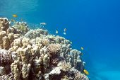 image of bottom  - Coral reef with porites corals at the bottom of tropical sea underwater - JPG