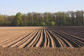 Empty Potatoe Acre In The Sun