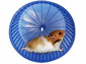 pic of gerbil  - Hamster in a wheel over white background - JPG