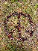 pine cone peace symbol
