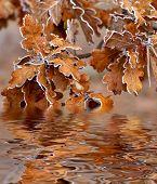 hojas del roble de otoño se refleja en el agua