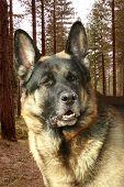 Rollo Groer Hund