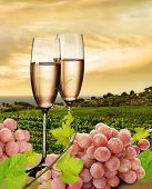 Champagne with background of seaside vineyard and pink grapes