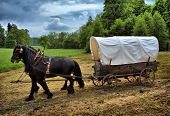 foto of covered wagon  - Vintage chariot with two black horses - JPG
