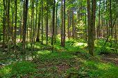 Floresta selvagem. Visão de grande angular.