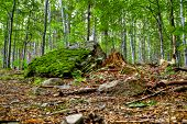 Floresta selvagem. Pedra grande em primeiro plano.