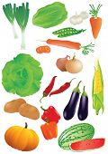 Vector set of 14 fresh vegetables.