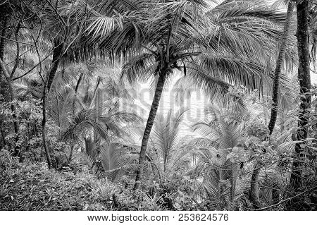 Jungle Forest In Devils Island
