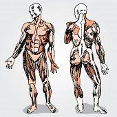 Sketch of Men's Anatomy Colorful