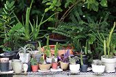 Many Small Pots Fill With Plants For Decoration Or Small Gardening poster