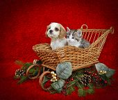 stock photo of christmas dog  - Christmas puppy and kitten sitting in a sled with copy space on a red background - JPG
