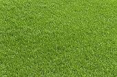 Green Grass Field, Green Lawn. Green Grass For Golf Course, Soccer, Football, Sport. Green Turf Gras poster
