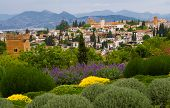 stock photo of urbanisation  - skyline of alhambra garanada spain with sierra Nevada hill in the background and green shrubs in the foreground - JPG