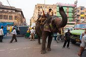 Downtown Delhi Traffic Elephant Cause India