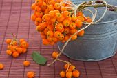 Ashberry Cluster With Orange Berry In Metallic Bowl On Wooden Background