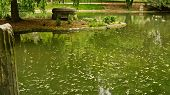 Lake In The Parc Monceau