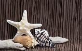 Seashells Driftwood On Brown Background