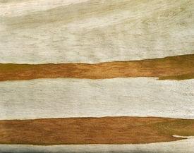 foto of eucalyptus trees  - Close up of Eucalyptus tree bark as interesting background - JPG