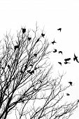 picture of winter trees  - black and white image of birds flying off a tree - JPG