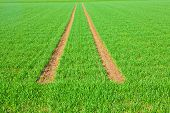 stock photo of veer  - Tire Path In green Field in springtime - JPG