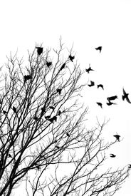 image of winter trees  - black and white image of birds flying off a tree - JPG