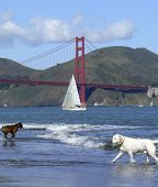 Golden_gate_dog_day