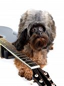 Decorative Shaggy Doggie And Black Guitar.