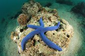 Blue Starfish underwater