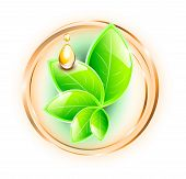 picture of drop oil  - Large green plant with small oil drops on golden rings - JPG