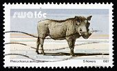 Postage Stamp South West Africa 1987 Warthog, Wild Pig