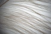 image of ostrich plumage  - Close up of the black feather plumage texture.