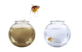 pic of fishbowl  - Conceptual image of a fish jumping from his polluted bowl into a clean fishbowl - JPG