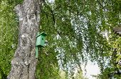 Bird House Nesting-box Hang On Birch Tree Trunk