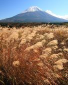Mt. Fuji In Fall
