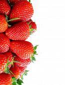Fresh ripe perfect strawberry