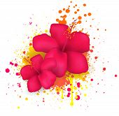 stock photo of backround  - Two red hibiscus flowers on grunge splattered backround - JPG