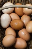 Basket Of Organic Free Range Eggs